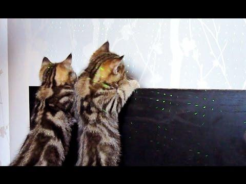 Cute Kittens Laser show