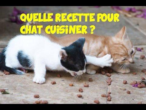 Quelle Recette Pour Chat 🐱 Cuisiner Vous-même ?