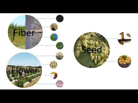 Three Types Of Hemp Crops And Their Uses: Seed, Fiber, and Flower.