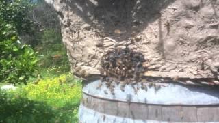 גידול דבורים ביתי / ביו דינמי עם הילמר קונמן
