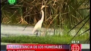 Importancia de los humedales (Canal 4)