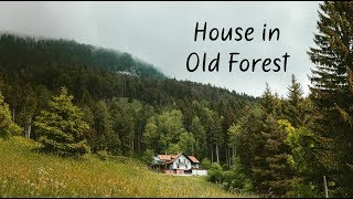 House in Old Forest | Beautiful Chill Mix
