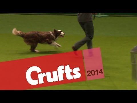 Freestyle Heelwork to Music | Crufts 2014