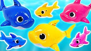 아기상어, 엄마상어, 아빠상어 상어가족이 어항에서 노래부르고 수영해요~! | 핑키팝토이
