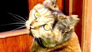 【開けてぇ・・】野良出身猫は出口の確保が必須?【猫と日本の庭】 thumbnail