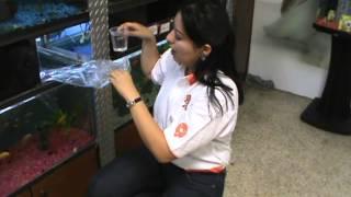 Cuidados de las mascotas: Tip +KOTA sobre la llegada de un nuevo pez a tu pecera.