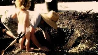 Planting a Jacaranda Tree