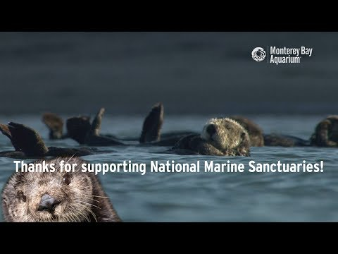 National Marine Sanctuaries Are Otterly Important!