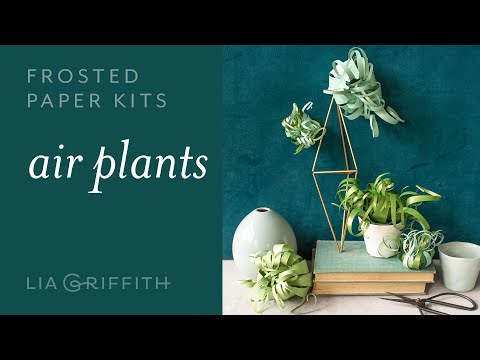 DIY Stunning Paper Air Plants : Easy to Use - Frosted Paper Kit (full tutorial)