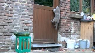 smart cat knocks if door is locked (see till end)