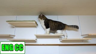 BossKichi finally goes through the new passage of the catwalk in cat room【Eng CC】