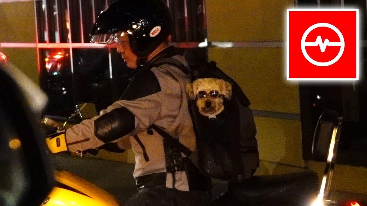 Pies w okularach na motocyklu