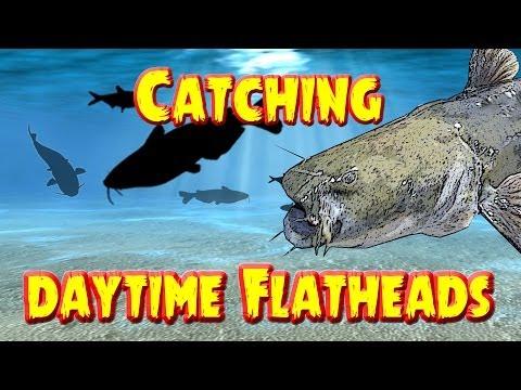 Video Flathead catfishing