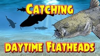 Catching  Flathead catfish in the daytime