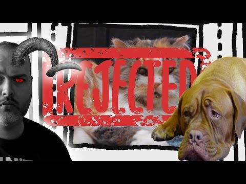 Kittens, puppies and DEATH | Animal Inspector (Good Ending)