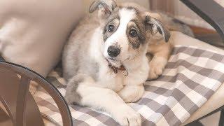 Красивый одинокий щенок ищет дом в Новосибирске Puppy is looking for a house