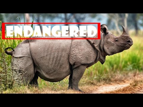 some fascinating animals that are endangered A compilation of some facts about the endangered animals which will help you picture the grave situation that kingdom animalia is facing continue reading for more information of species fighting for their very survival on the planet.