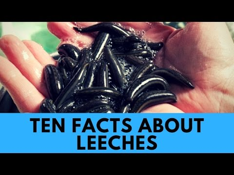 Ten Facts About Leeches