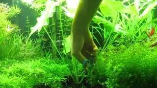 Trimming My Aquatic Plants