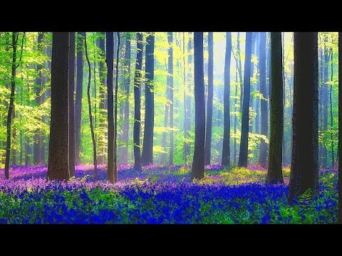 Relaxing Music for Stress Relief. Soothing Celtic Music for Meditation, Healing Therapy, Sleep, Yog