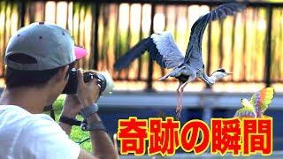 鳥VS人間のバードウォッチング選手権で奇跡の1枚が撮れました!!