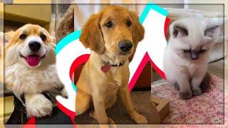Baixar The Cutest Pets on TikTok🥺😻 (ily - surf mesa)