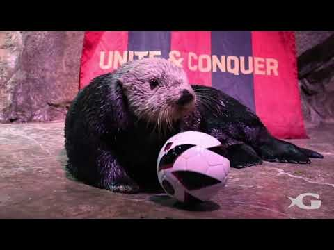 Georgia Aquarium Cheers on the Atlanta United Football Club