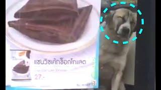 日本では考えられませんが、タイでは犬がセブンイレブンで涼んでいるの...