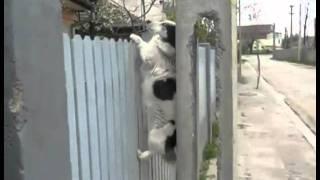 Spacy.Tv - Собака поднимается по забору