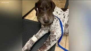 Meridian dog recovering after being bitten five times by rattlesnake