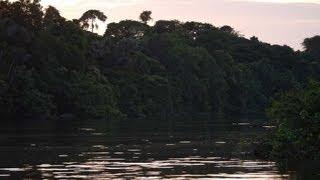 The Brazilian Amazon at Night