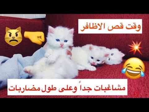 القطط باقي صغار بس لازم ... 😅 / Mohamed Vlog