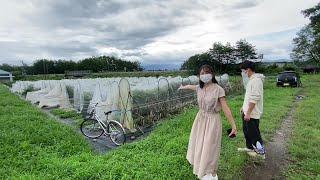 【農学部】松島憲一准教授 根本和洋助教(植物遺伝育種学研究室)2021オープンラボ動画