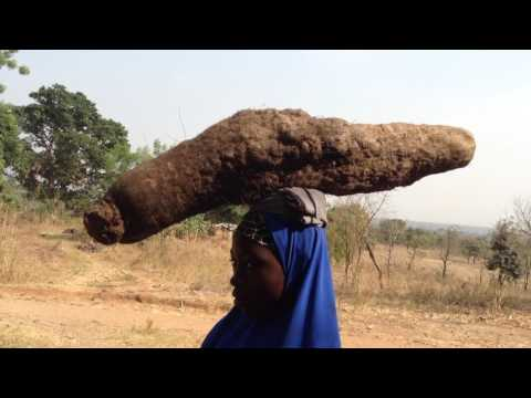 Fulani Girls carrying freshly harvested African Yams, Langa Langa Village, Nigeria