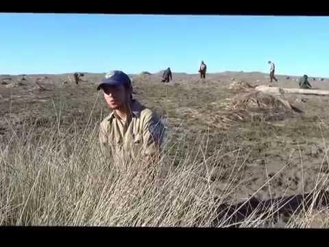 Pulling Grass to Save an Endangered Bird