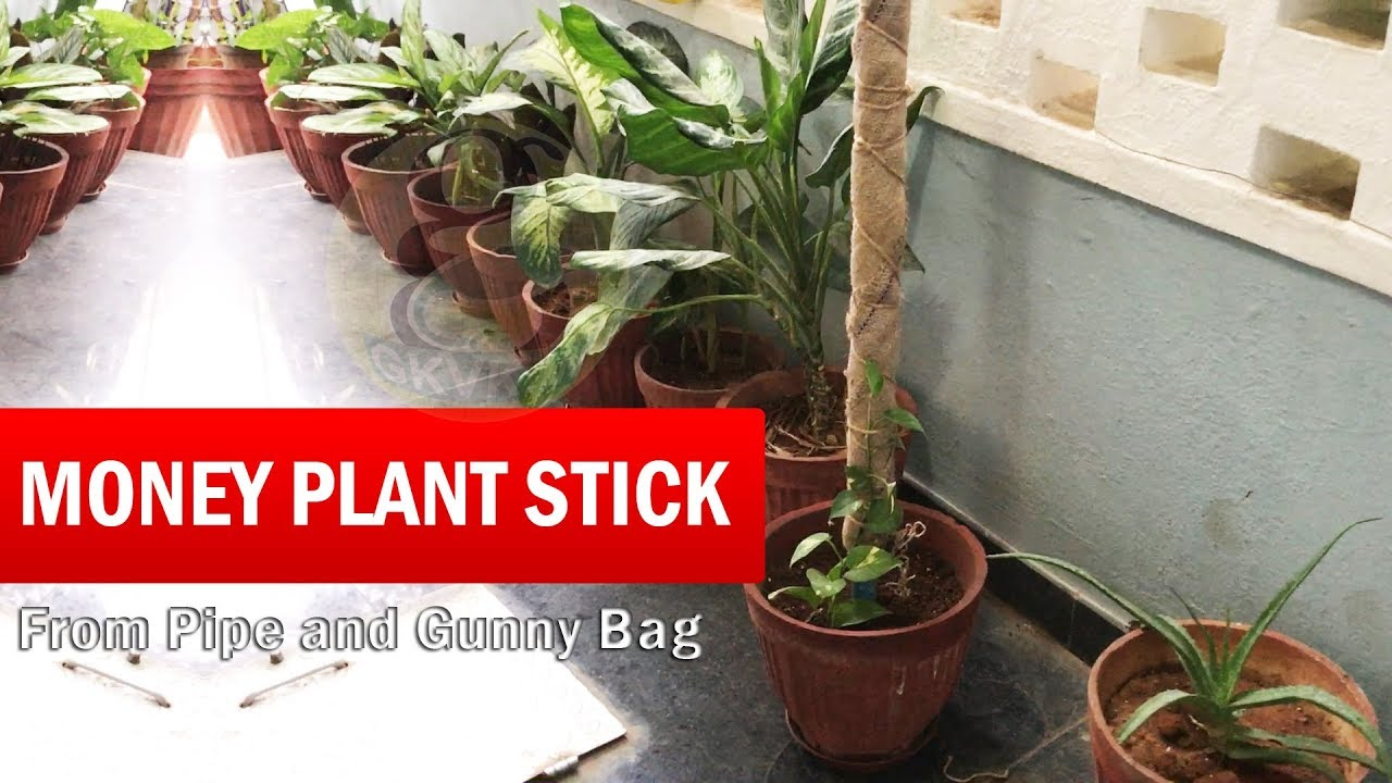 Diy plant supports - Diy Money Plant Stick Money Plant Support Or Climbing Stick Grow Faster From Gunny Bag