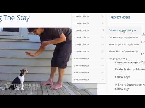 A Review And Preview Of Inside The Online Dog Trainer By Doggy Dan