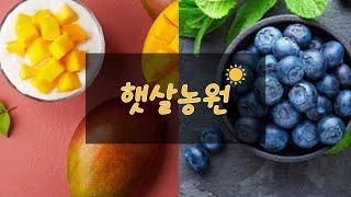 통영 애플망고 블루베리는 햇살농원에서~!