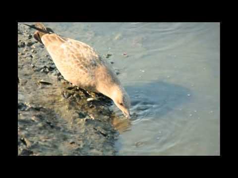Fishing bird at oceanside youtube for Oceanside fish report