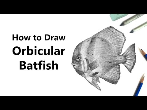 How to Draw an Orbicular Batfish with Pencils [Time Lapse]