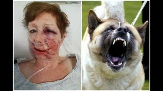 Top 10 Dog Breeds That Are Banned in the USA