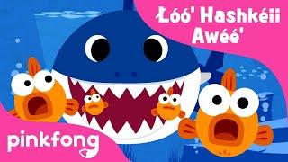 Łóó' Hashkéii Awéé' | Baby Shark Navajo | Navajo Nation | Pinkfong Songs for Children