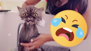 My Persian cat taking a shower 🛀 😍😂