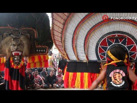 Pembarong Hebat Dan Lincah Berkumpul Memainkan Dadak Merak, Reog Ponorogo Di Krebet Jambon