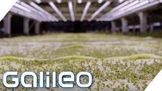 Der Bauernhof der Zukunft: Was macht ihn so besonders? | Galileo | ProSieben