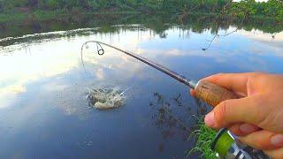 РАДИ ТАКОЙ ПОКЛЁВКИ стоит ЖДАТЬ ЗАКАТА СПИННИНГ В ДУГУ ЭТА рыба сразу НЕ СДАЁТСЯ Рыбалка летом