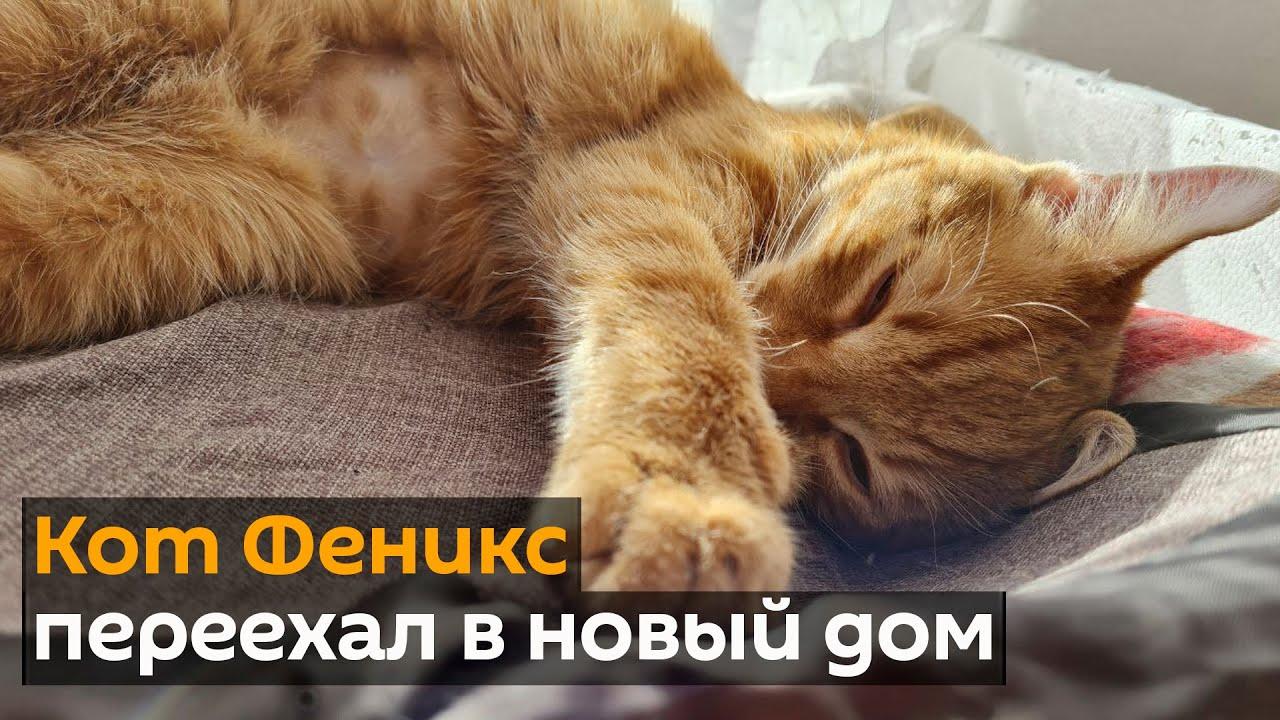 Как живет кот, который стал жертвой жестокой игры ребенка