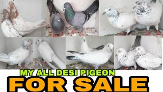 My DESI PIGEON FOR SALE..8830263699/08655549047