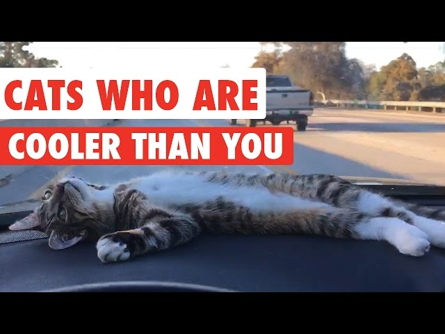 Cats Who Are Cooler Than You Video Compilation 2016