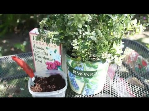 How to Acidify Soil for Blueberries : Garden Space